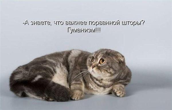 Смешные картинки испуганных котов