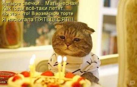 День рождения смешного кота