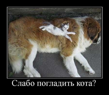 Смешной и живой подушка кота