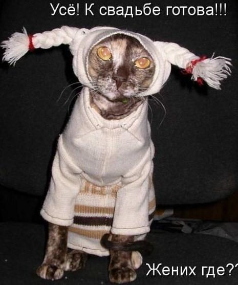 Смешные картинки у смешного кота
