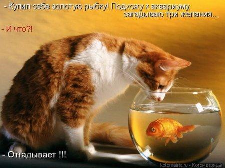 Прикольный кот разговаривает с
