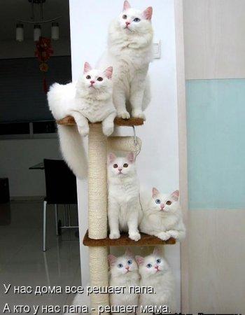 Пушистые смешные кошки устроились в
