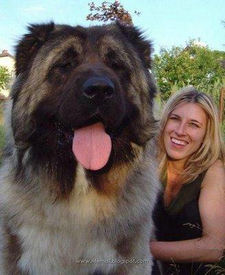 Прикольное фото про собаку которая