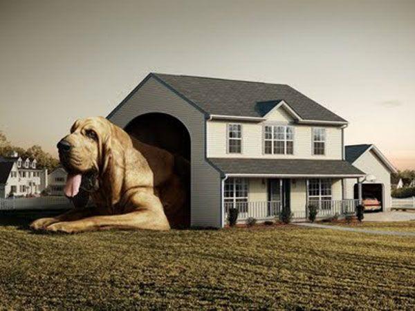 Прикольная собака в огромном доме