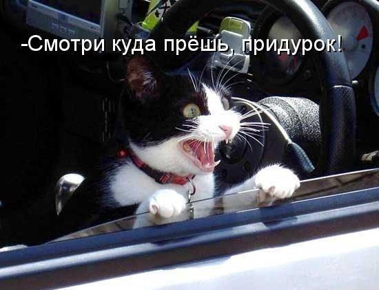 Прикольная картинка кошки