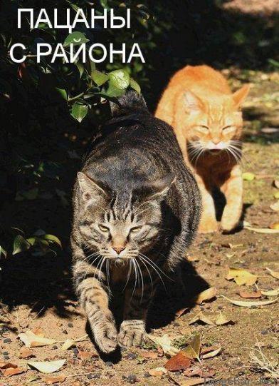 Фото приколы с животными: