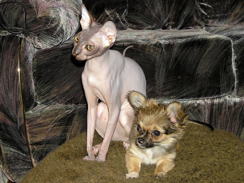 Смешные рисунки собак