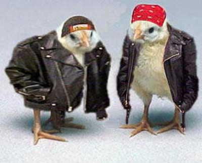Смешные птички в кожаных куртках