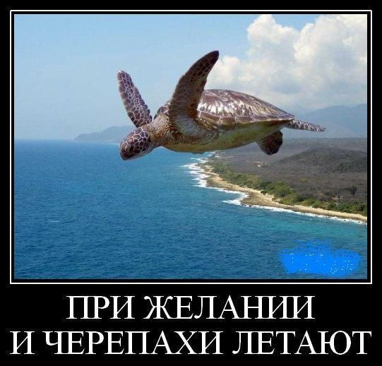 Смешная черепаха