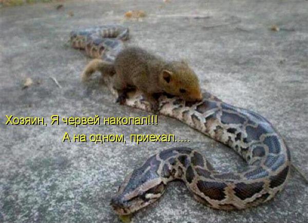 Прикольная мышка против змеи