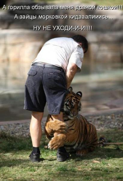 Смешной тигр