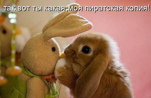 Смешное фото зайца