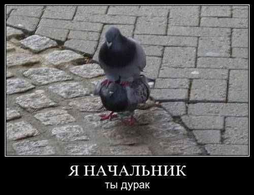 Смешные картинки птиц
