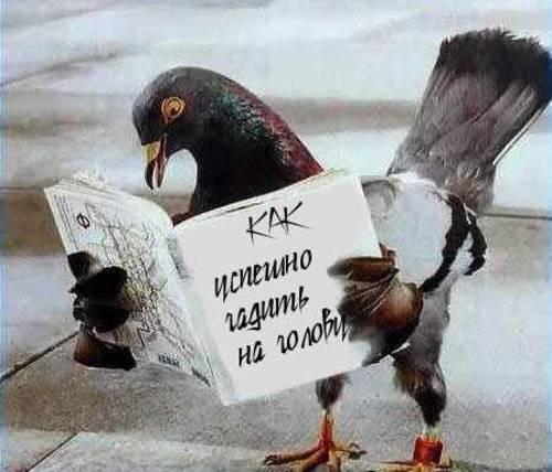 Смешной голубь придумает план атаки