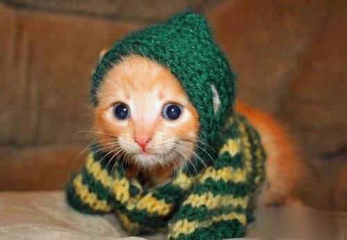 Приколы с котом в бабушкином шитье