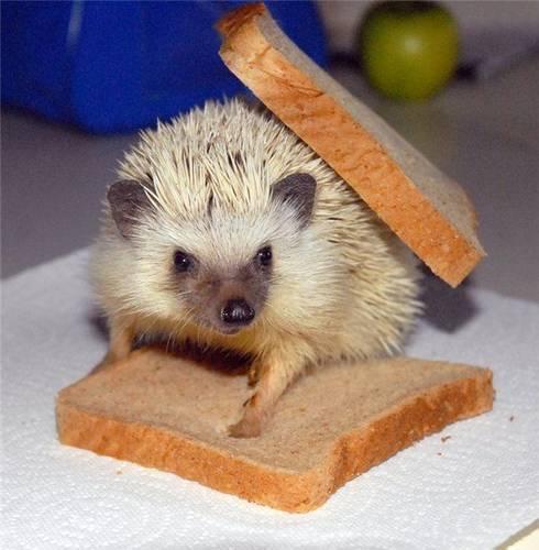 Смешные фото про животных в