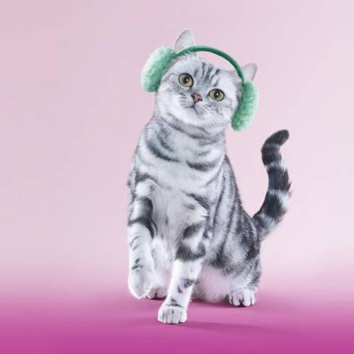 Слушать музыку кошки и коты
