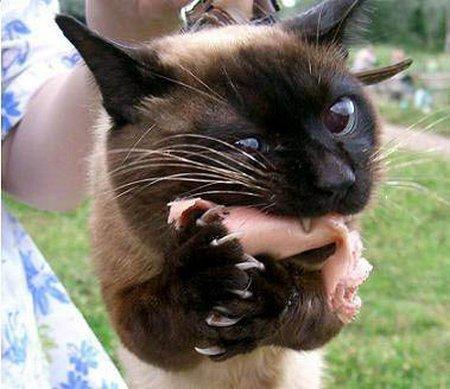 Прикольная кошка это моя сосиска не